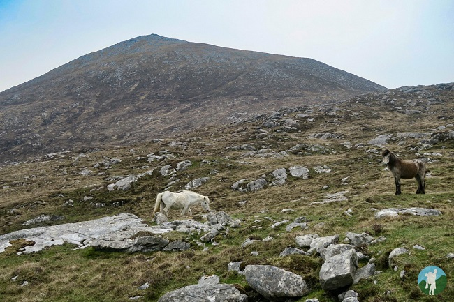 horses luskentyre walk mountain