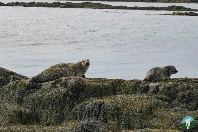 berneray seals