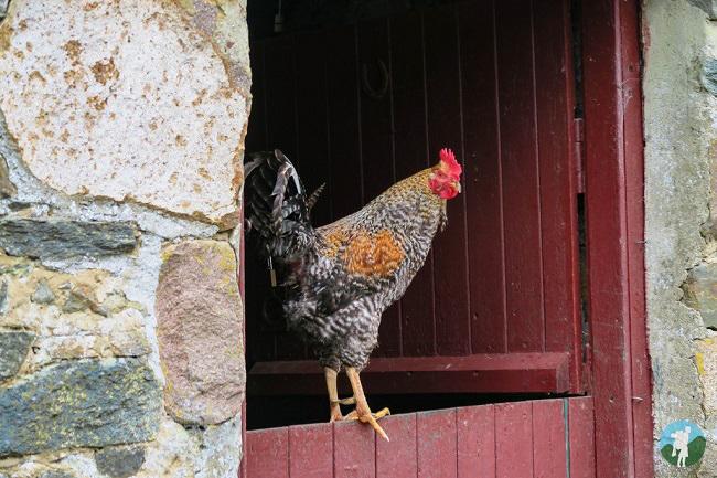 chicken auchindrain centre