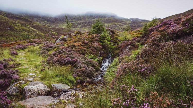 babbling brook scotland