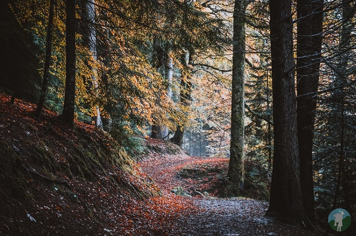 reelig glen autumn